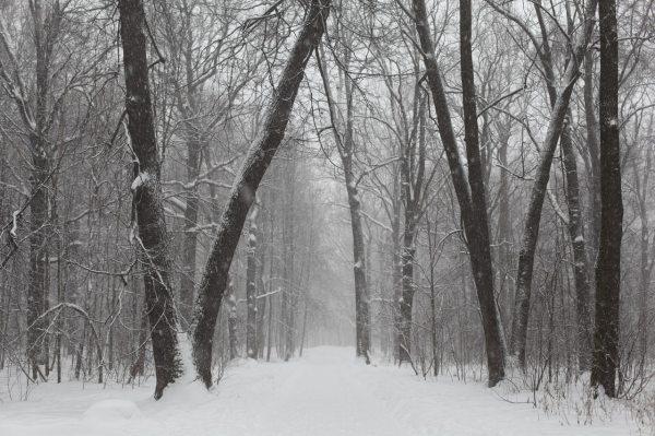 park-winter-russia-city-park-163756